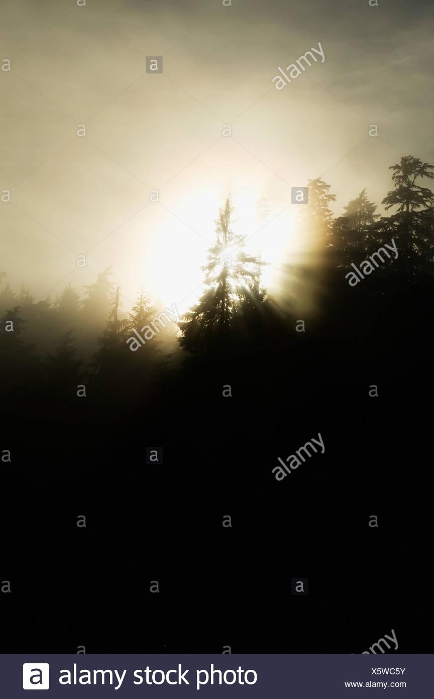 Sun shining through the mist - Stock Image