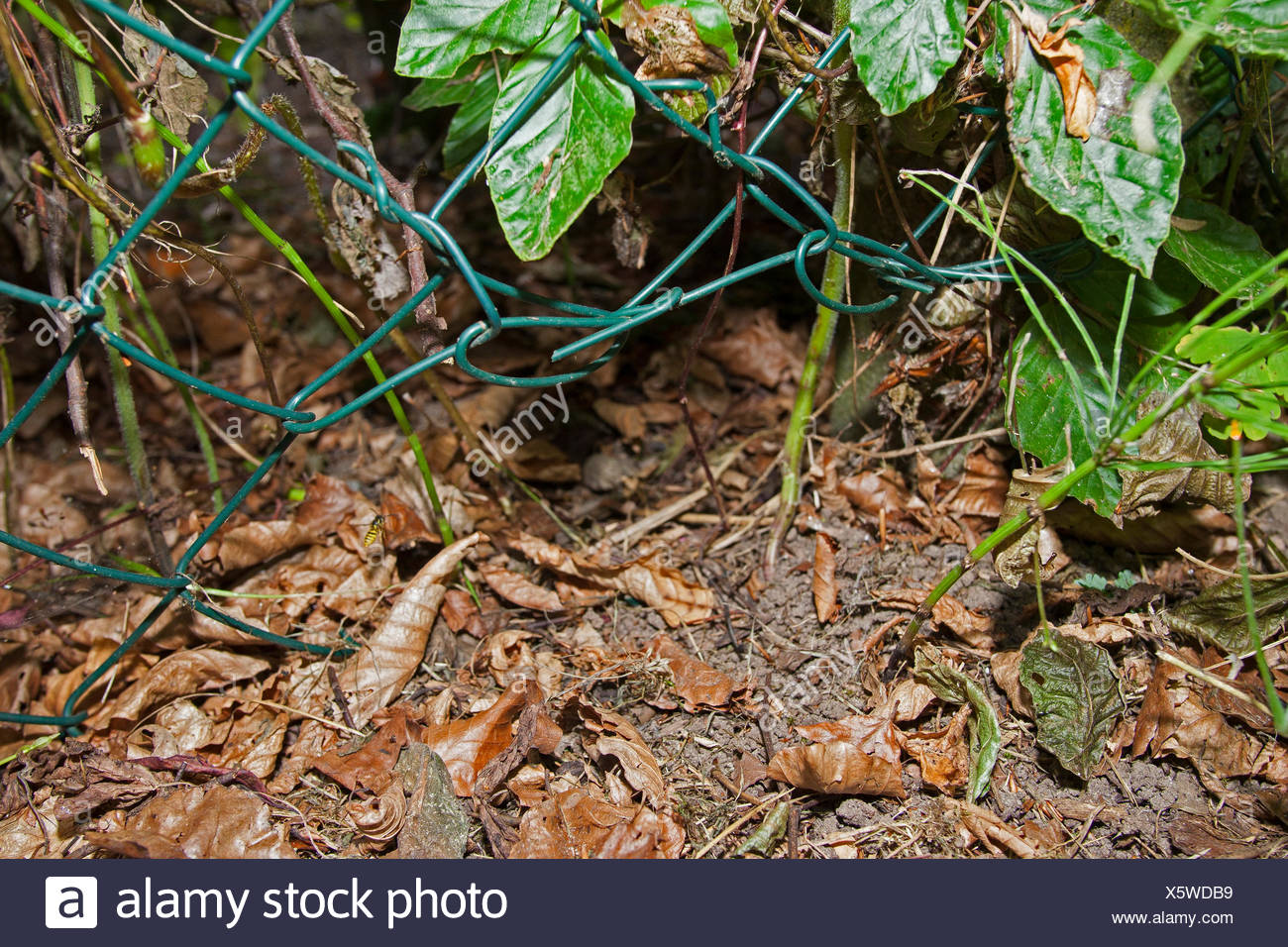 hole in a fence to offer an opening to hedgehogs, Germany - Stock Image