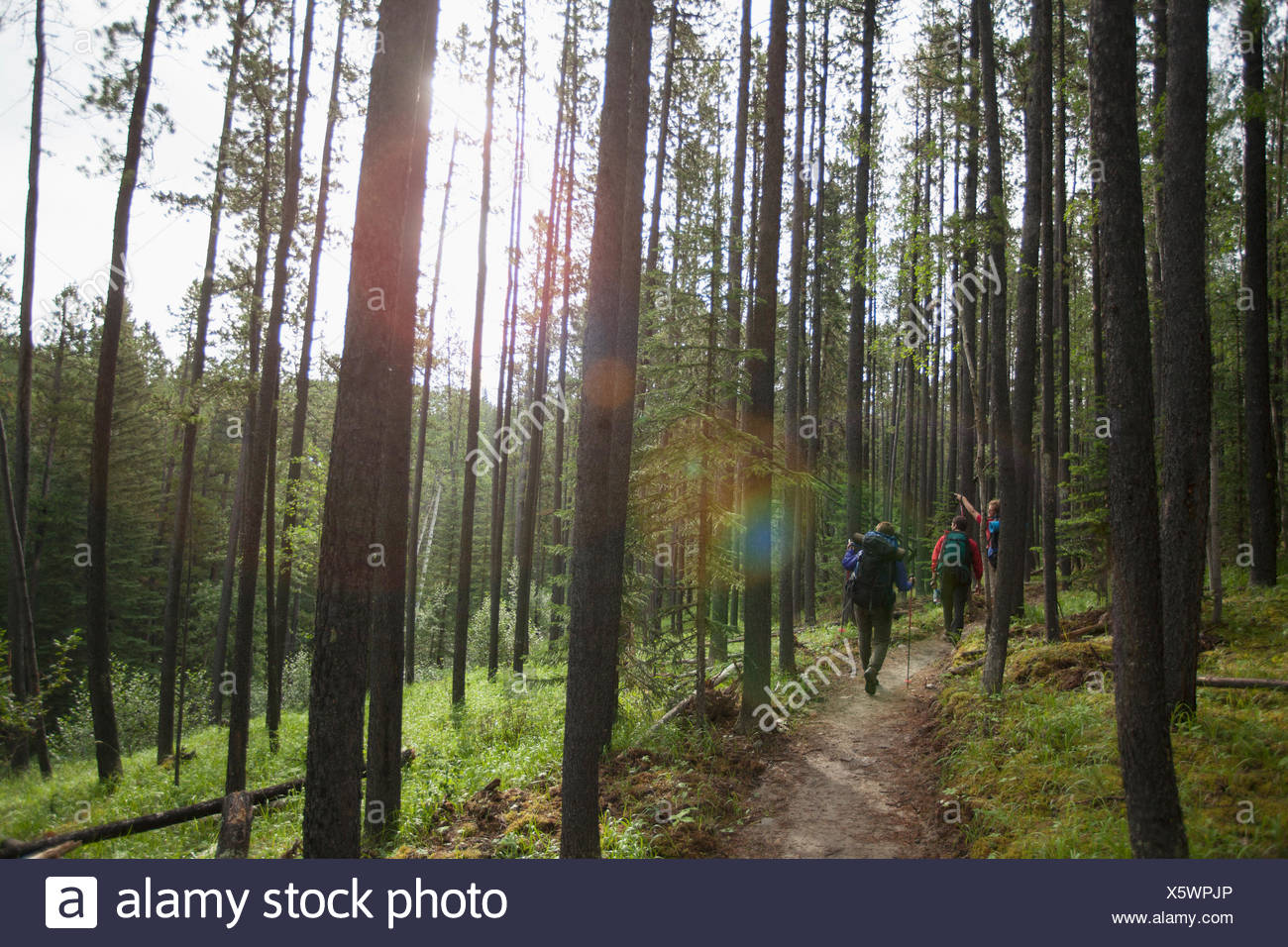 view from behind of three backpackers on a woodland trail - Stock Image