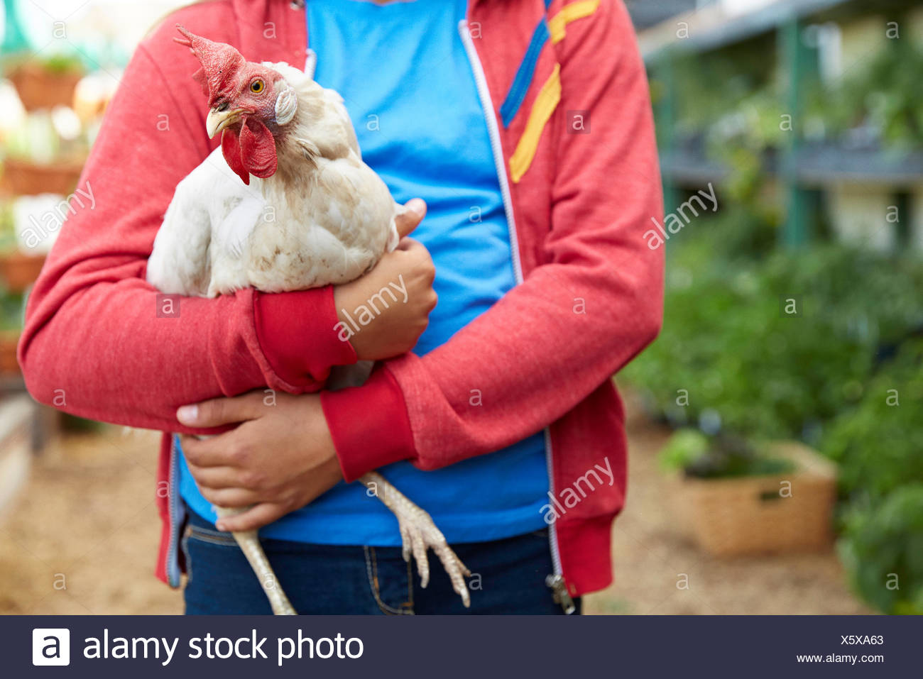 Close up girl holding chicken - Stock Image