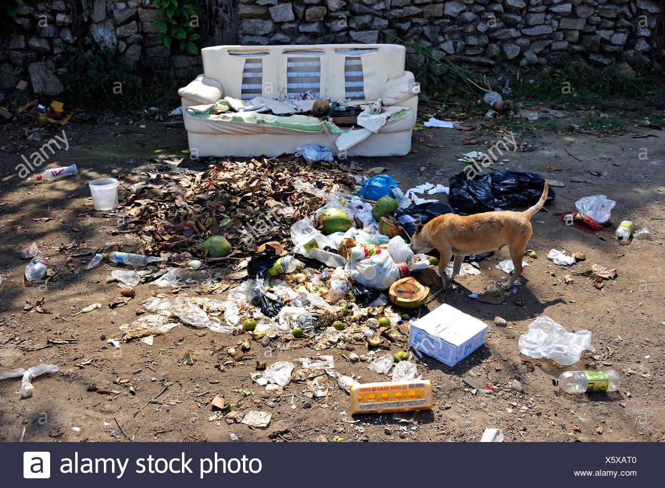 Dog rummaging through rubbish bags on a waste heap next to an old sofa, Rio de Janeiro, Brazil, South America, Latin America - Stock Image
