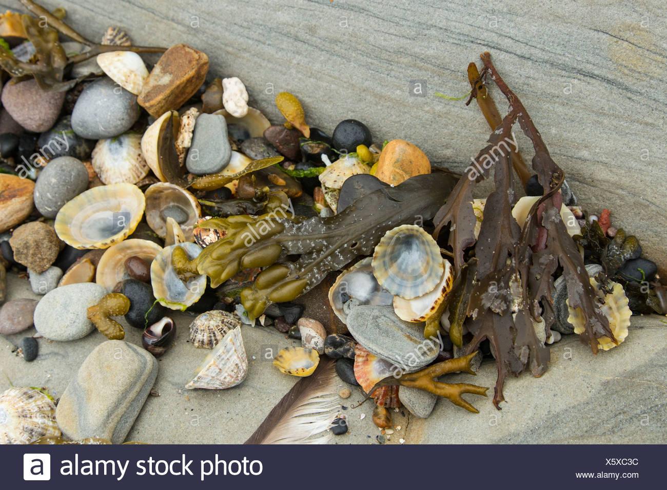 Flotsam and jetsam at the beach of Seahouses, Northumberland, England, United Kingdom, Europe - Stock Image