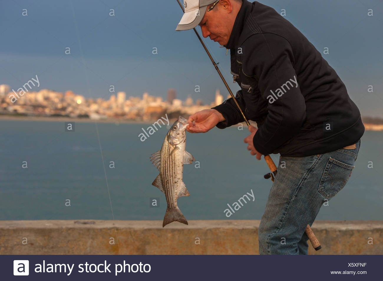 fisherman holding caught striped bass (Morone saxatilis), Golden Gate Pier, San Francisco, California, USA - Stock Image