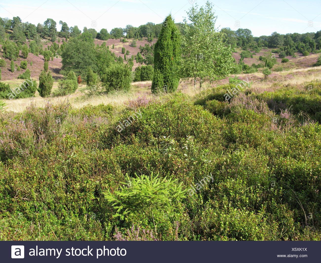 plant, conservation of nature, nature-sanctuary, tourist attraction, Northern Stock Photo