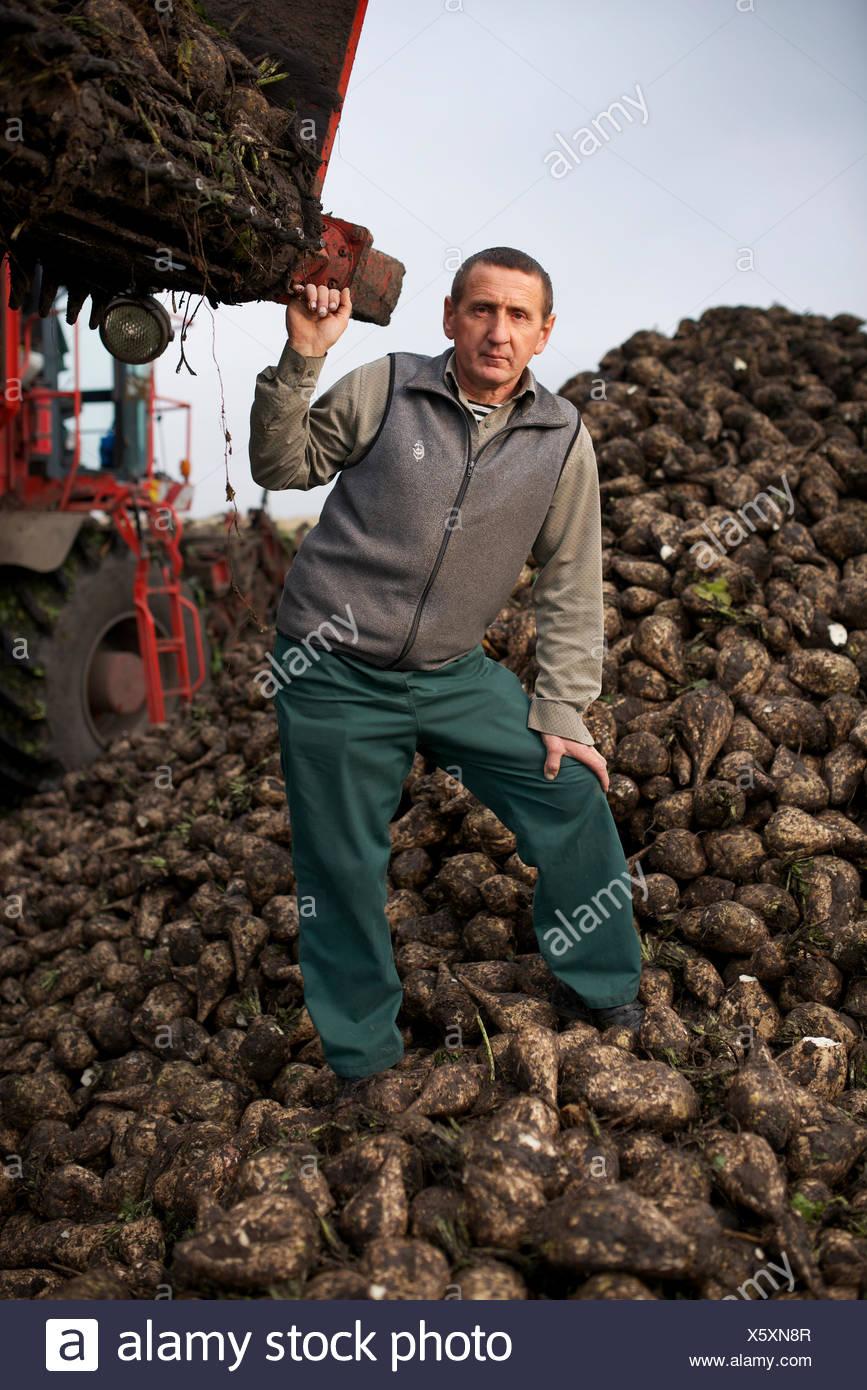 A sugar beet farmer. - Stock Image