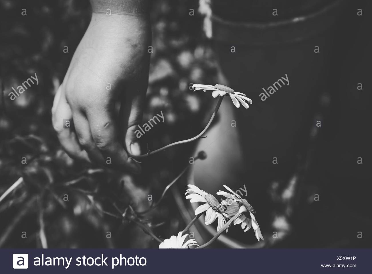 Cropped Hand Holding Flower On Field - Stock Image
