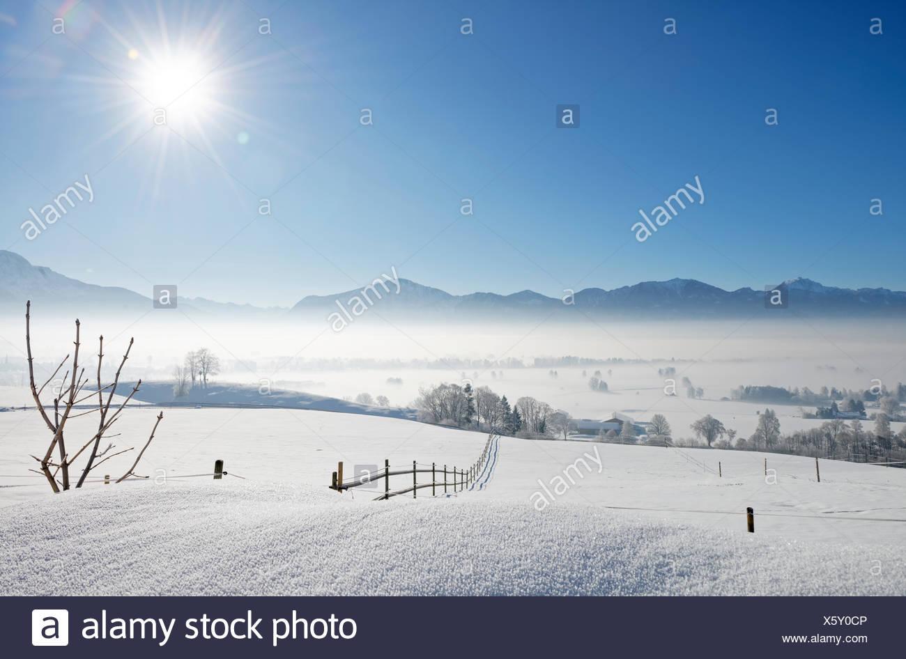 Morgennebel Ÿber Loisachmoor, Loisachtal bei Gro§weil, Blaues Land, Oberbayern, Bayern, Deutschland, Europa Stock Photo