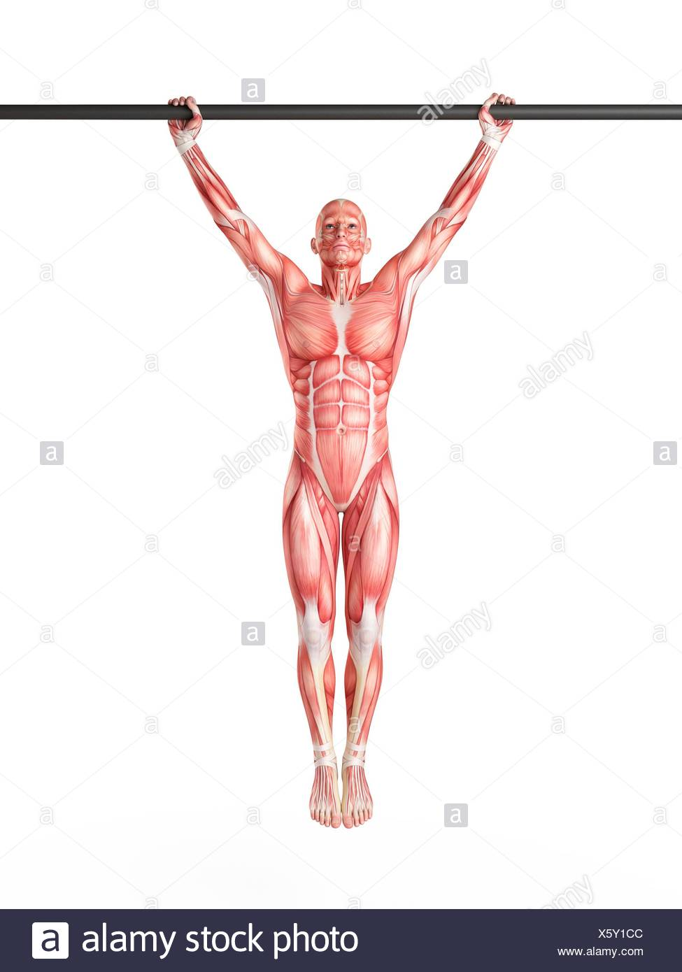 Pull Ups Cut Out Stock Images & Pictures - Alamy