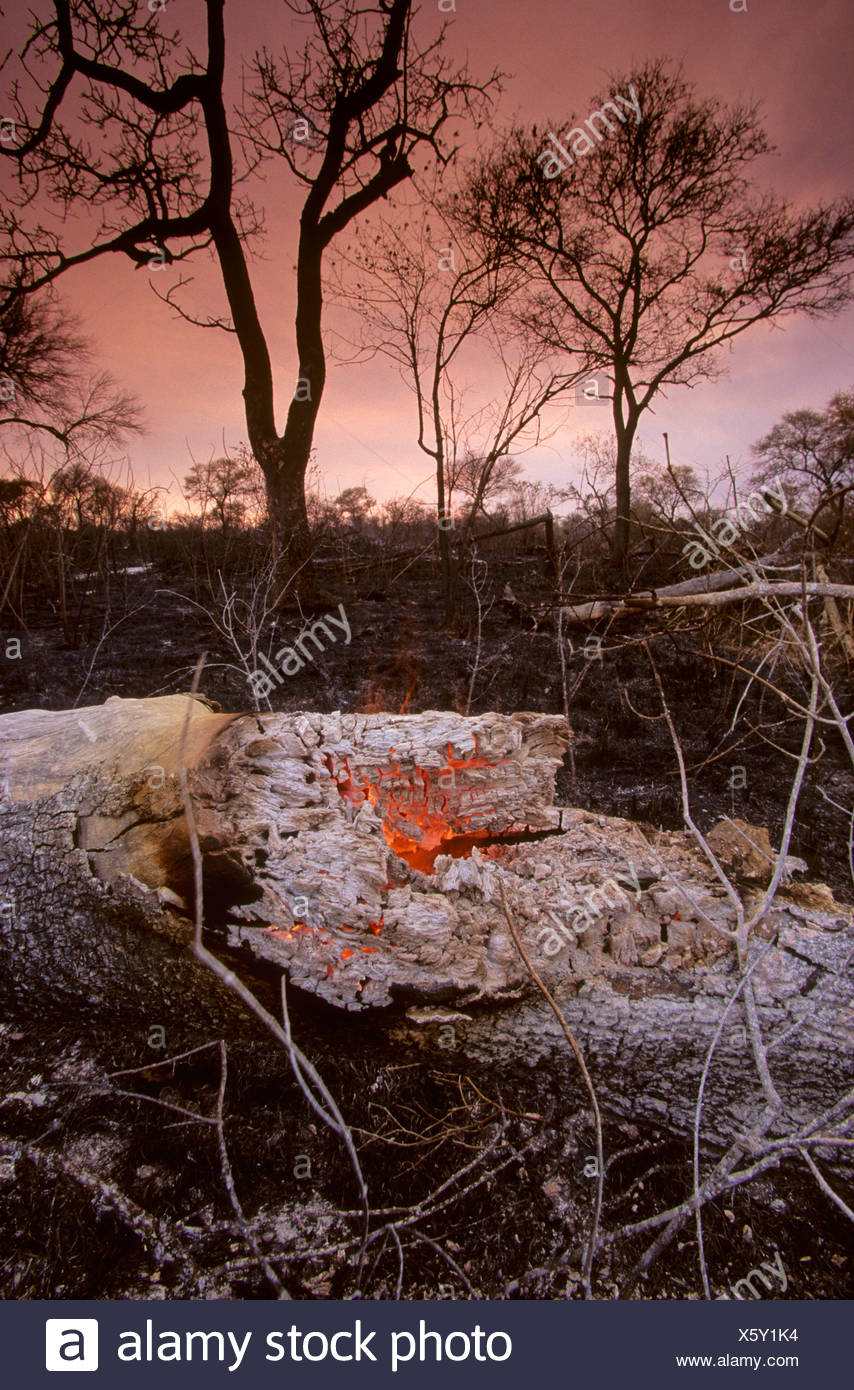 Global warming, bush fire during drought, Kruger National Park, South Africa - Stock Image