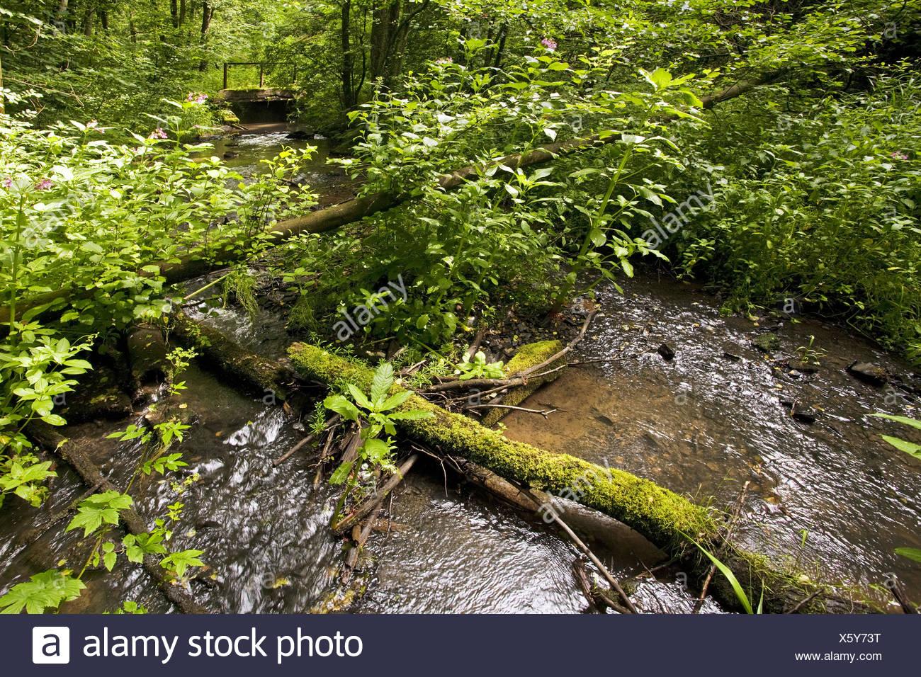 Landscape Elbschebach, Witten, Germany - Stock Image