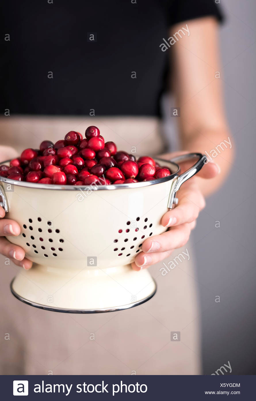 Bright red cranberries in a cream colored strainer being held by a woman in an apron. - Stock Image