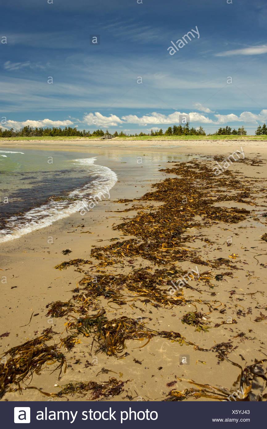 Martinique Beach Provincial Park, Nova Scotia, Canada Stock Photo