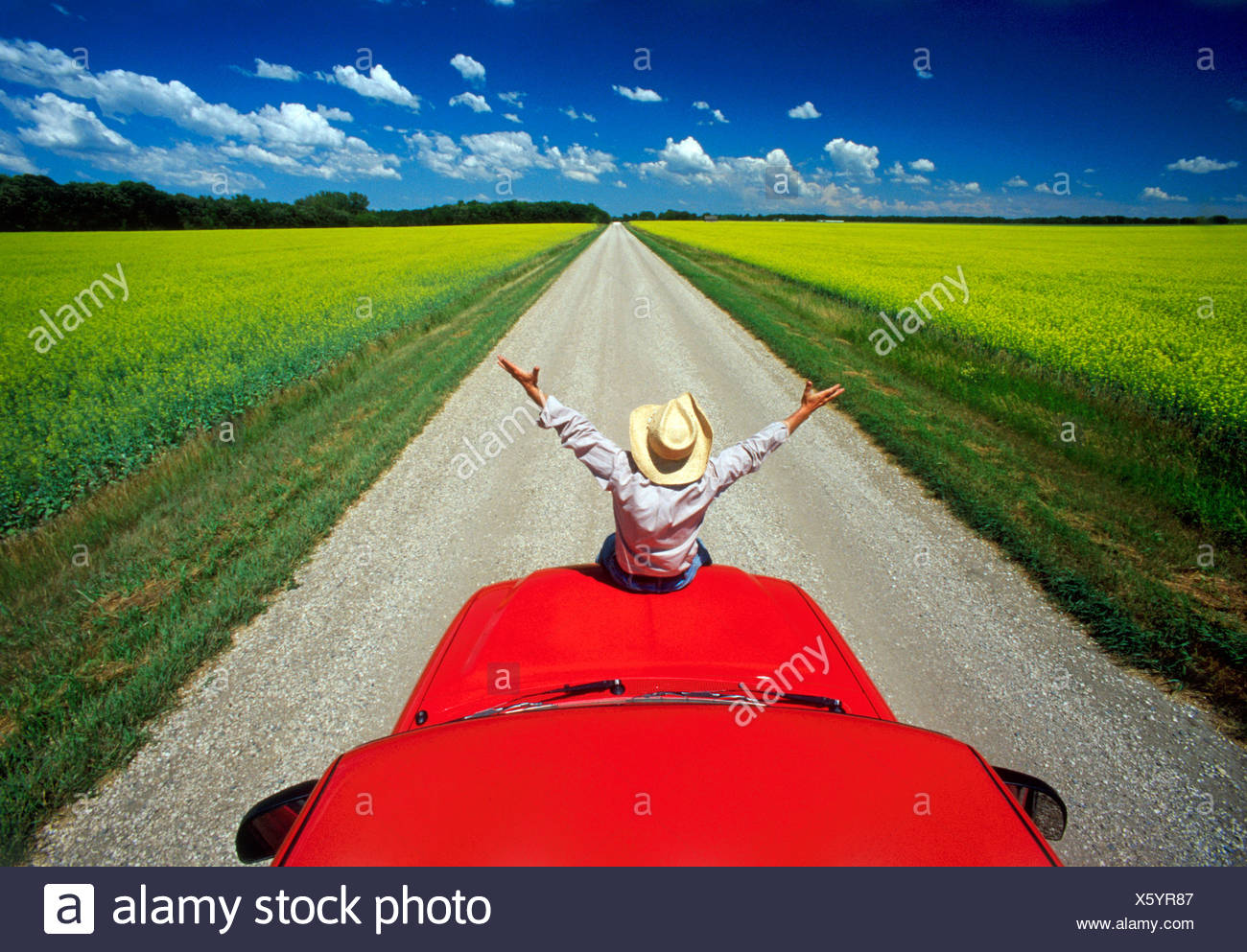 A man sits on the front of his truck overlooking a country road with blooming canola fields near Roland, Manitoba, Canada - Stock Image