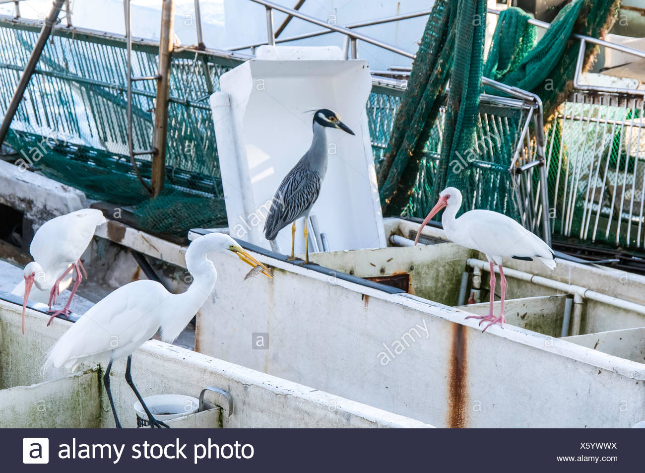USA, Florida, Miami, Birds standing on containers - Stock Image