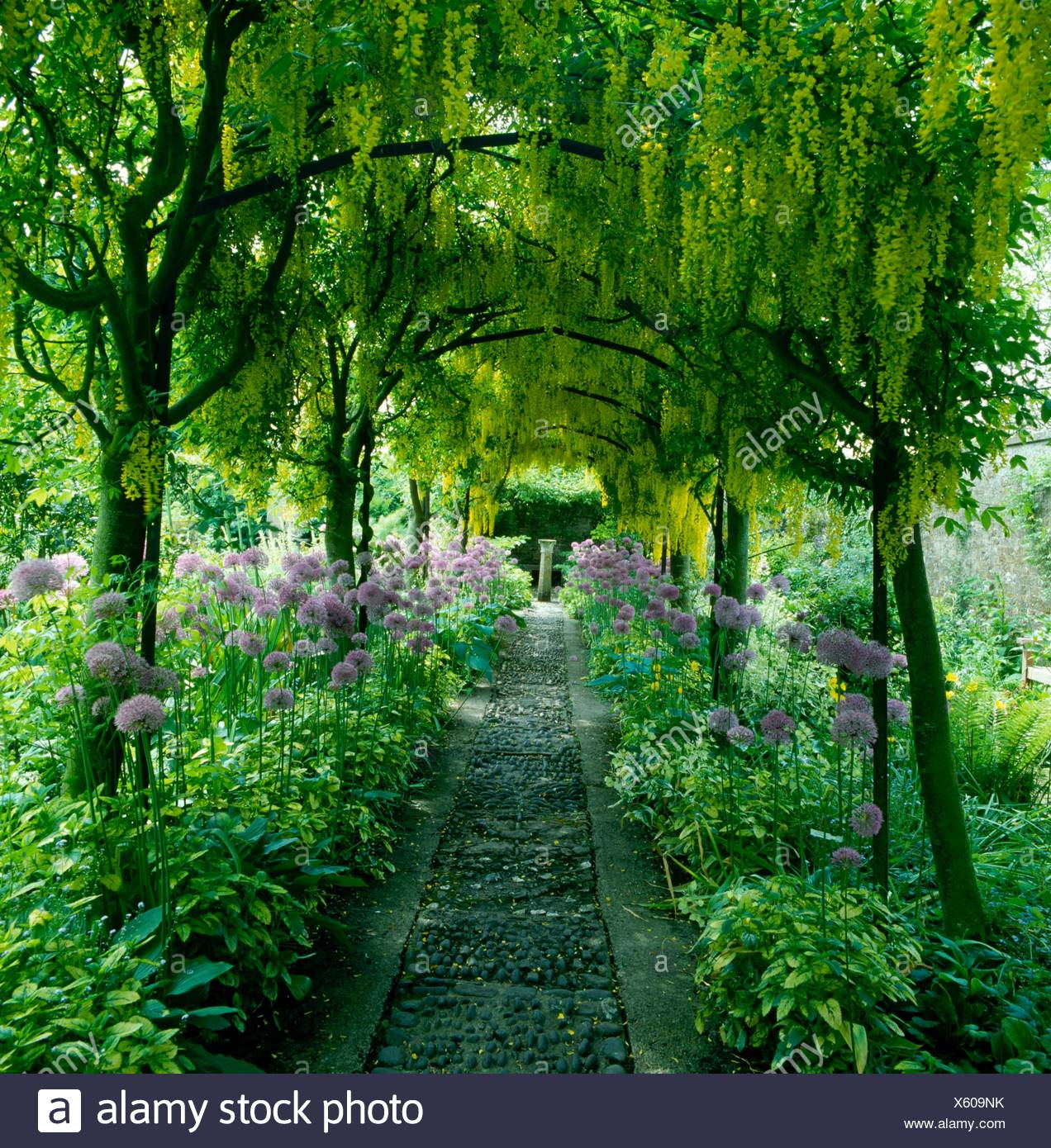 Archway - of Laburnum x watereri `Vossii' at Barnsley House. - - (Please credit: Photos Hort/designer Rosemary Verey)   Ref: PHS - Stock Image