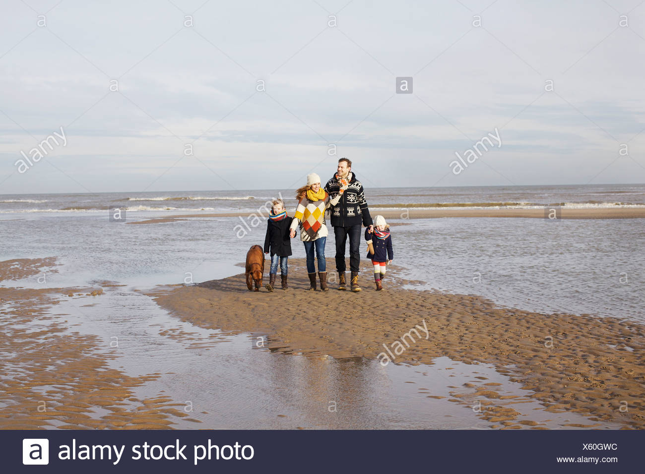 Mid adult parents with son, daughter and dog strolling on beach, Bloemendaal aan Zee, Netherlands - Stock Image