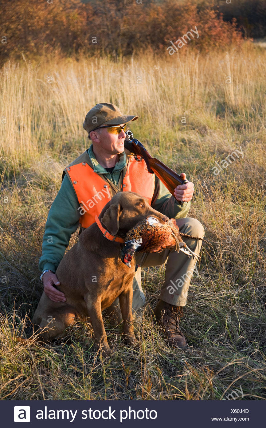 A bird hunter and his trained dog with a dead pheasant in its mouth. Retriever. - Stock Image