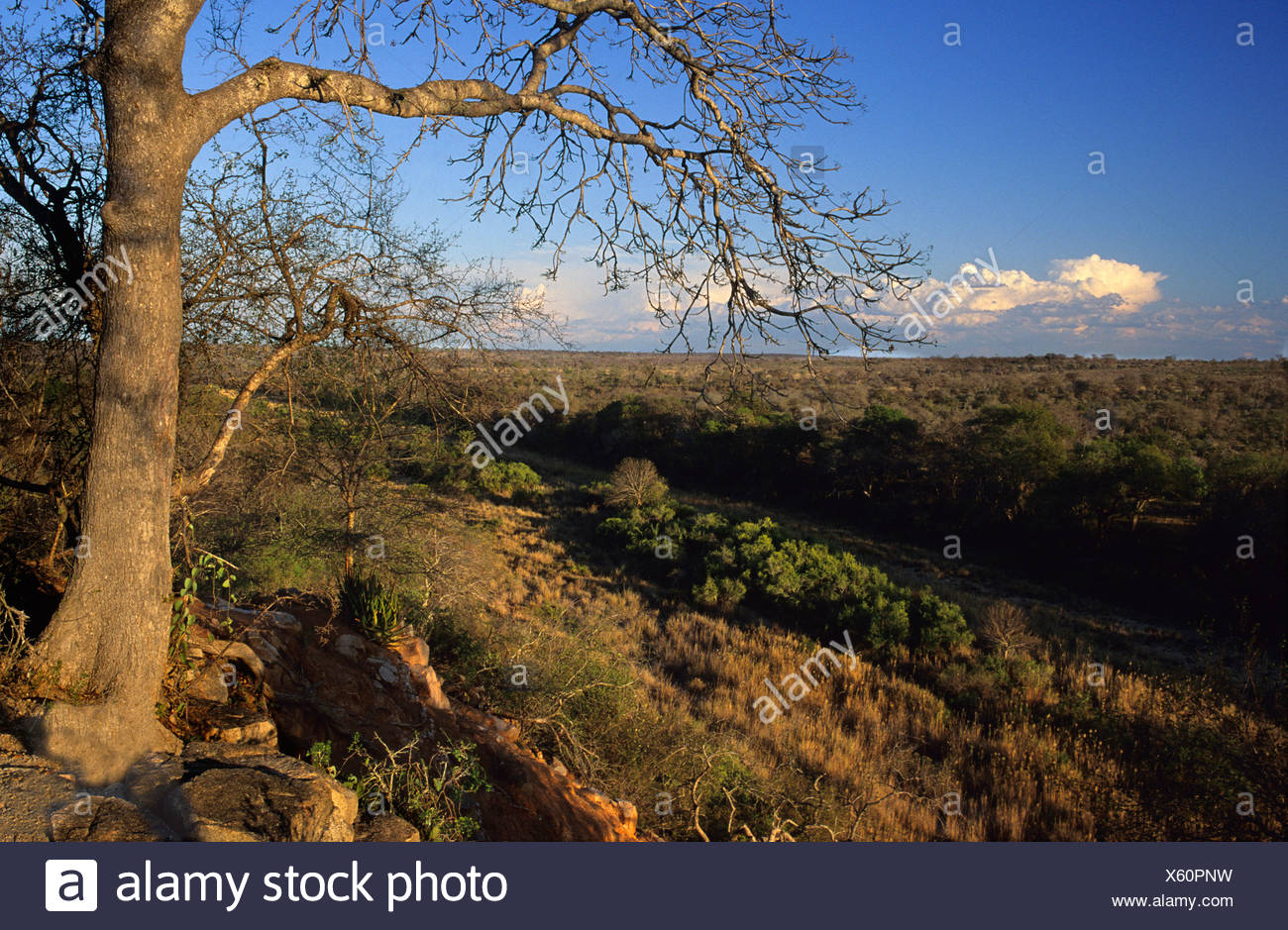 Bushveld in Timbavati area, Kruger National Park, South Africa - Stock Image