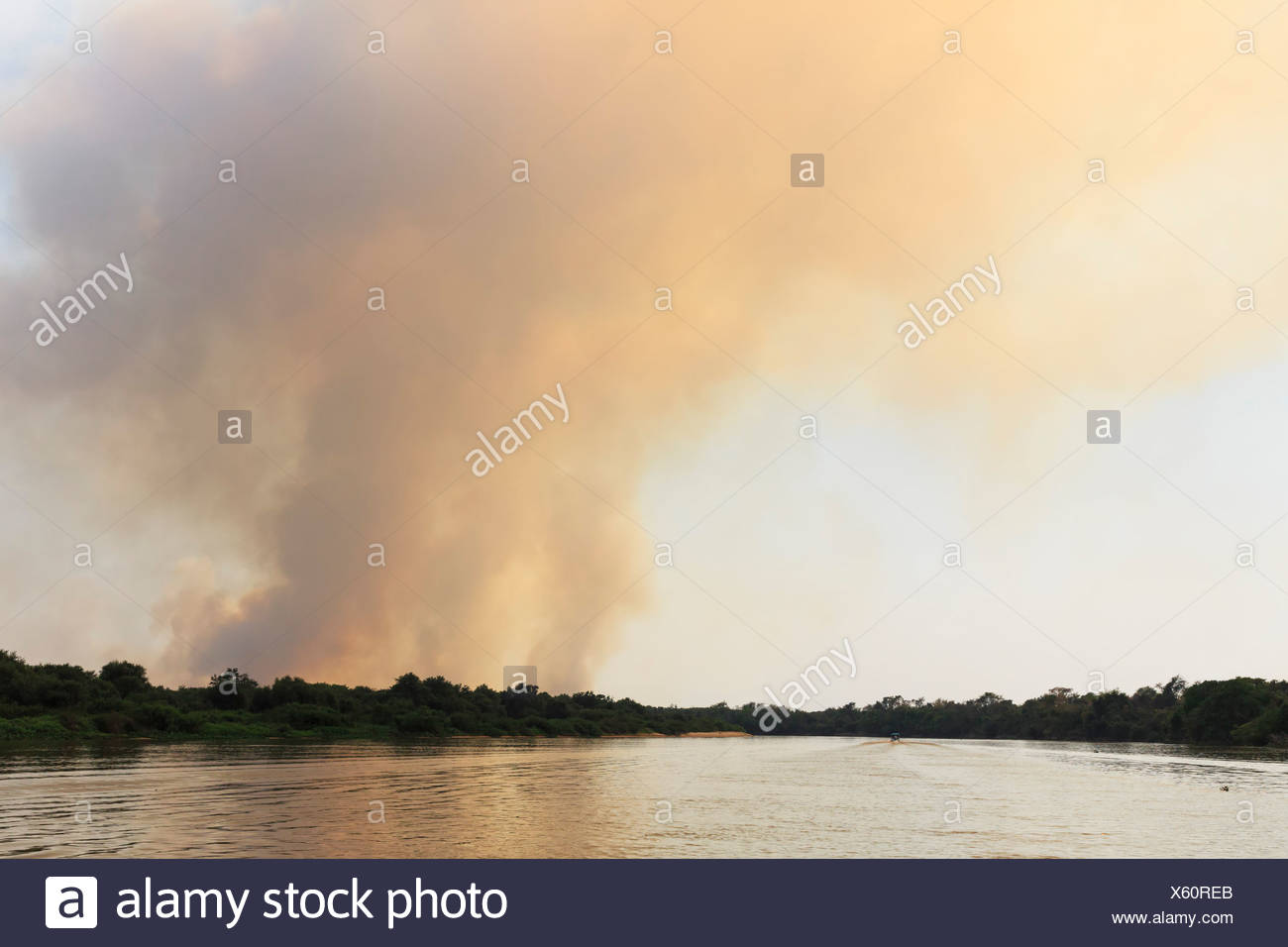 Brazil, Mato Grosso do Sul, Pantanal, Cuiaba River, Forest fire - Stock Image
