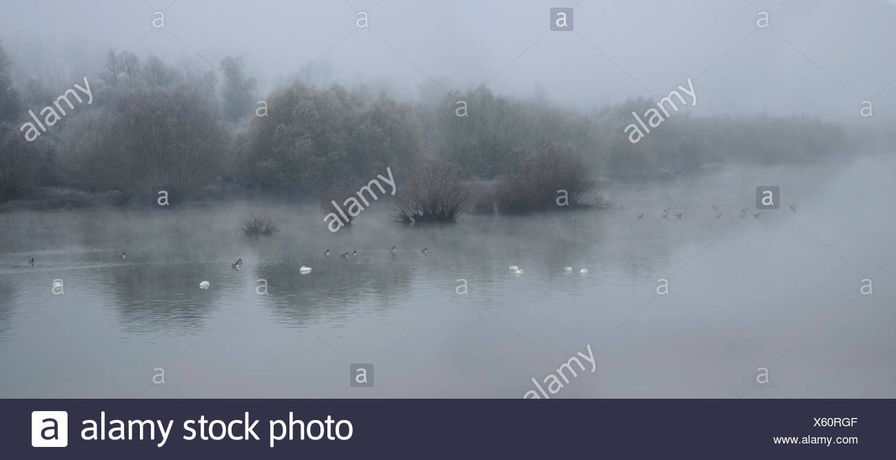 Sauer Delta in Autumn - Alsace France tributary of the Rhine - Stock Image
