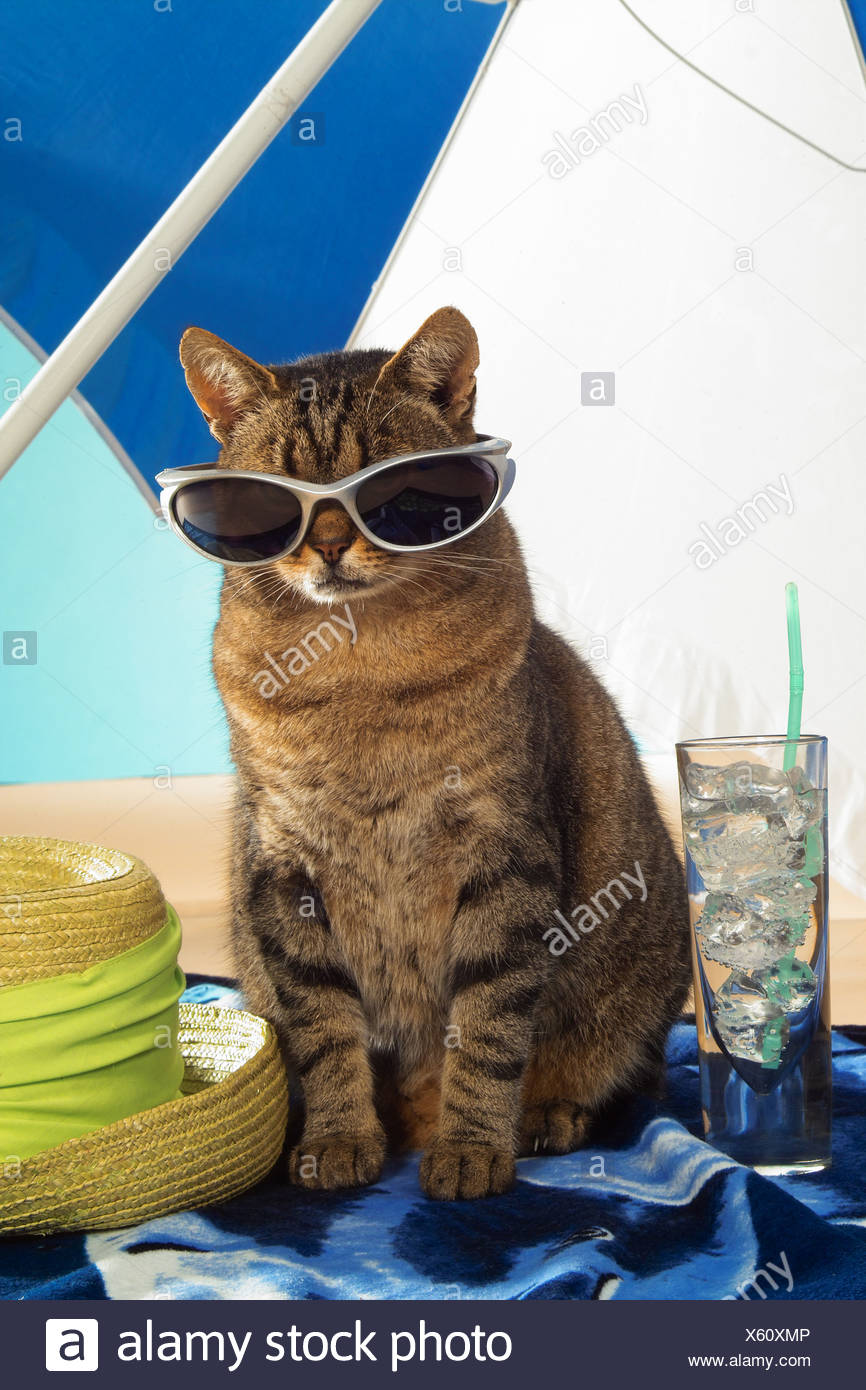 19abedf2497a7 Funny Cats With Sunglasses Stock Photos   Funny Cats With Sunglasses ...