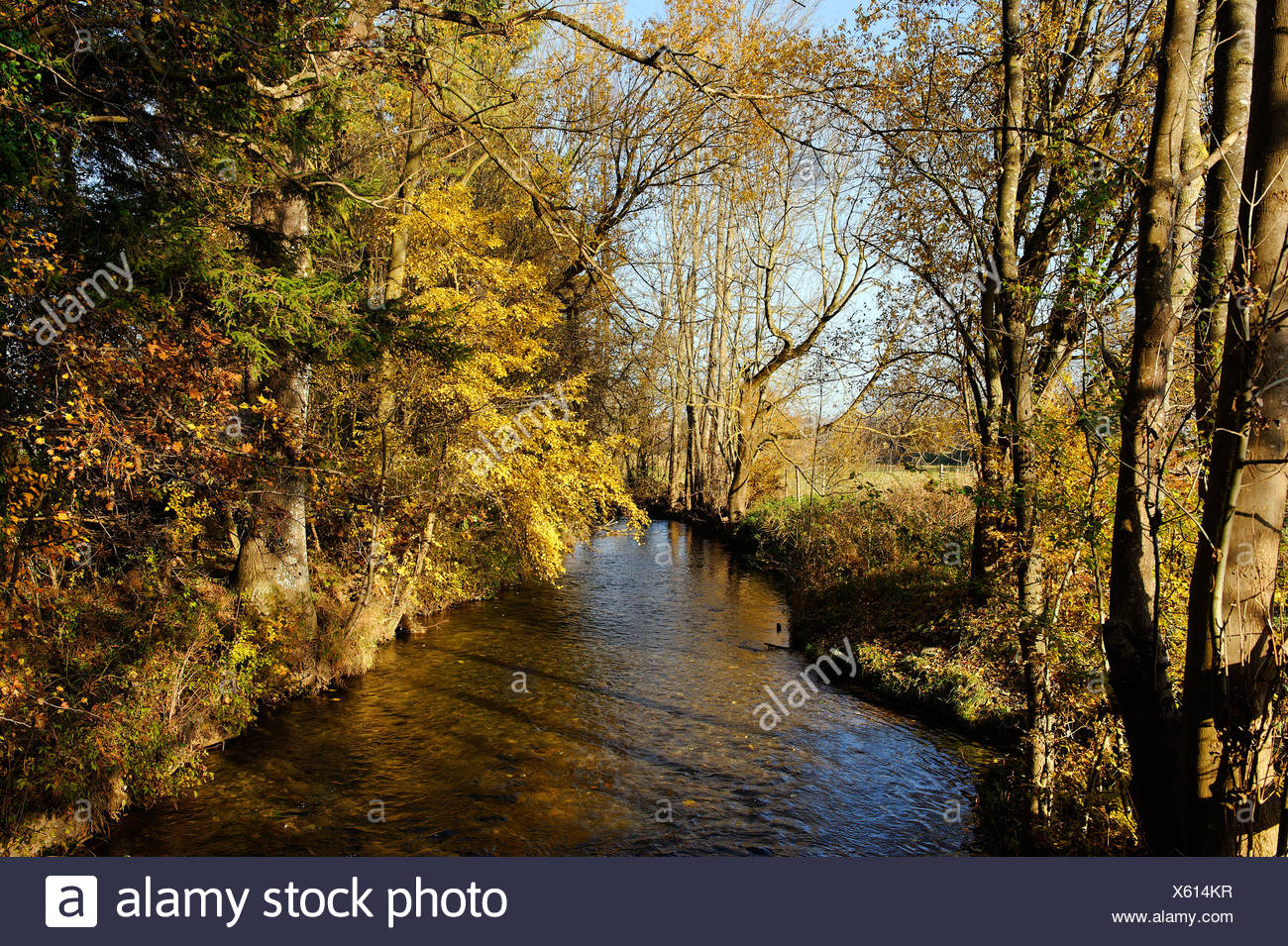 Tiefenbach stream, Polling, Upper Bavaria, Germany, Europe - Stock Image