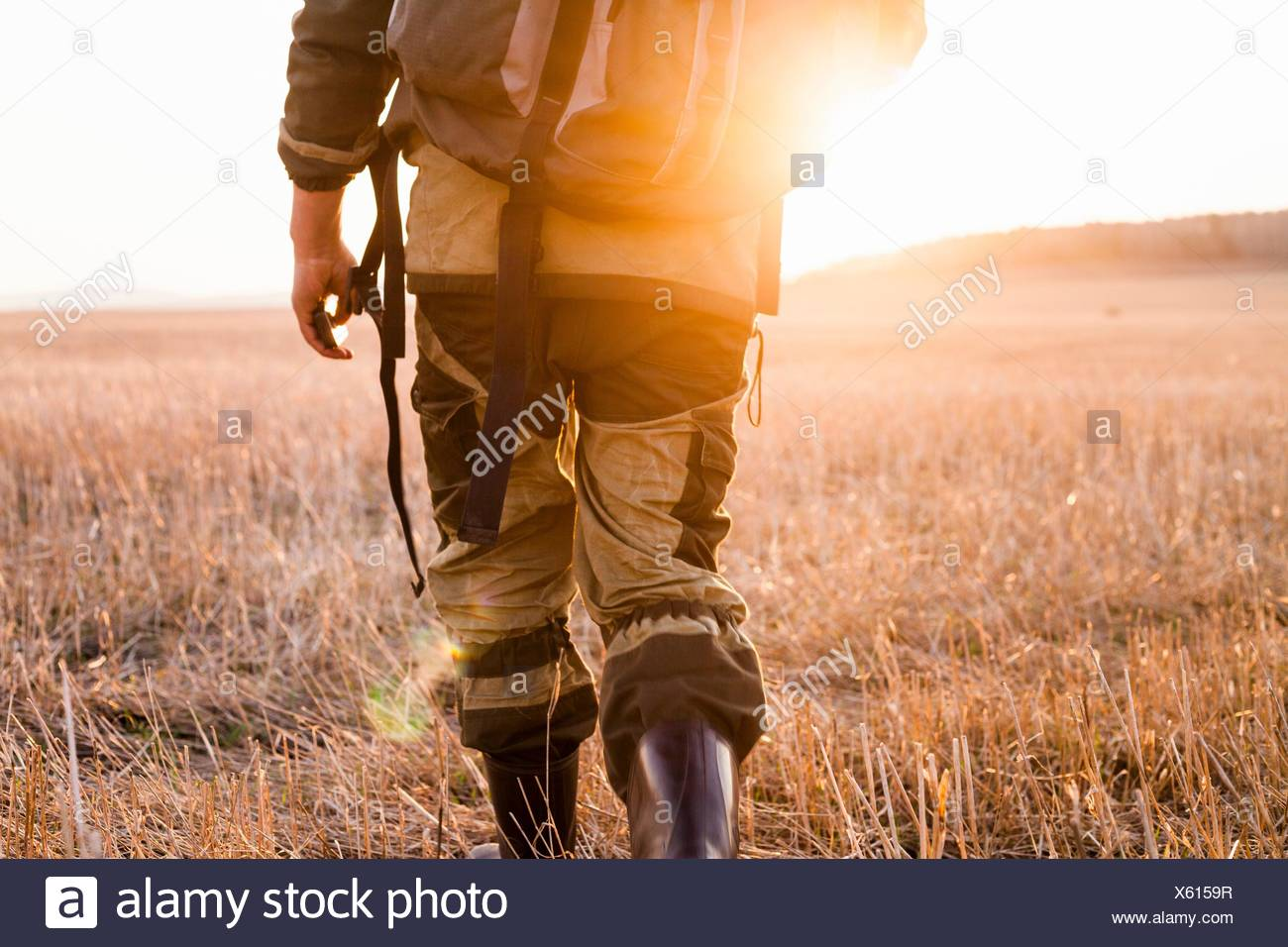 Mid adult man walking through fields, rear view, low section - Stock Image