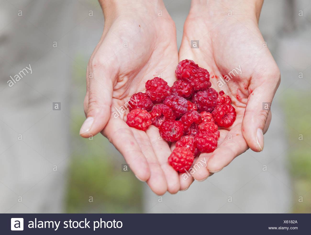 Hands, raspberries, collect, - Stock Image