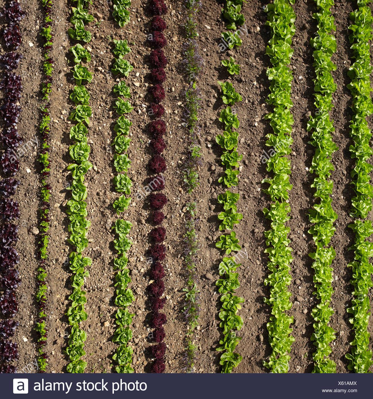 aerial view garden stock photos amp aerial view garden stock