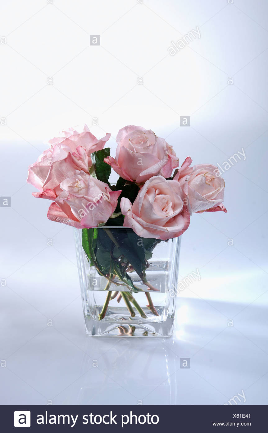 Alamy & Pink roses in a glass vase Stock Photo: 279086865 - Alamy