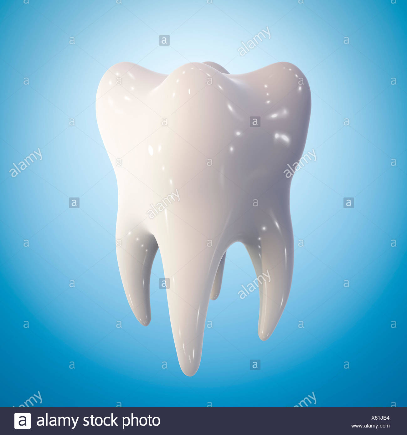 Healthy molar tooth, computer illustration. - Stock Image