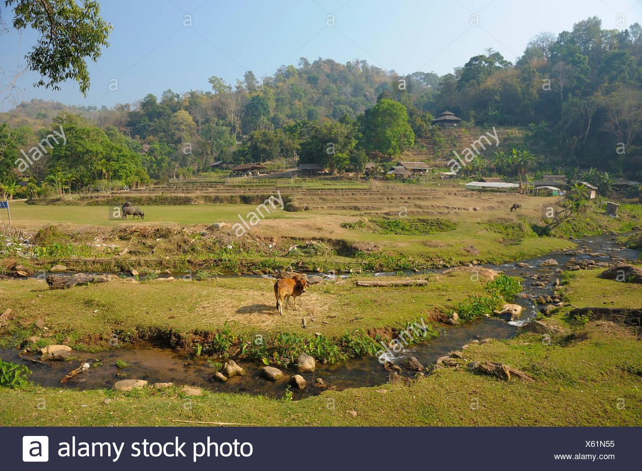 Mae Sa, landscape, Valley, Chiang Mai, Thailand, Asia, - Stock Image