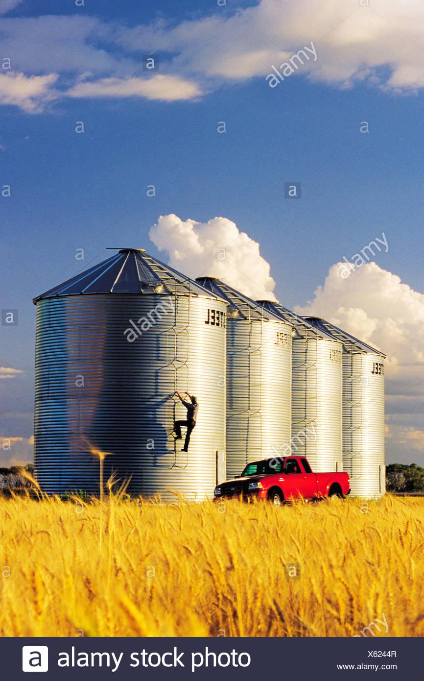 A farmer checks his grain storage bins located in front of a mature crop of winter wheat near Carey, Manitoba, Canada - Stock Image