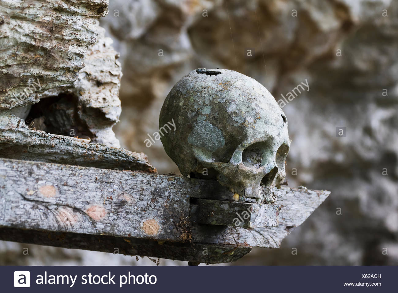 Skulls on a wooden coffin, Kete Kesu, Toraja Land, South Sulawesi, Indonesia - Stock Image