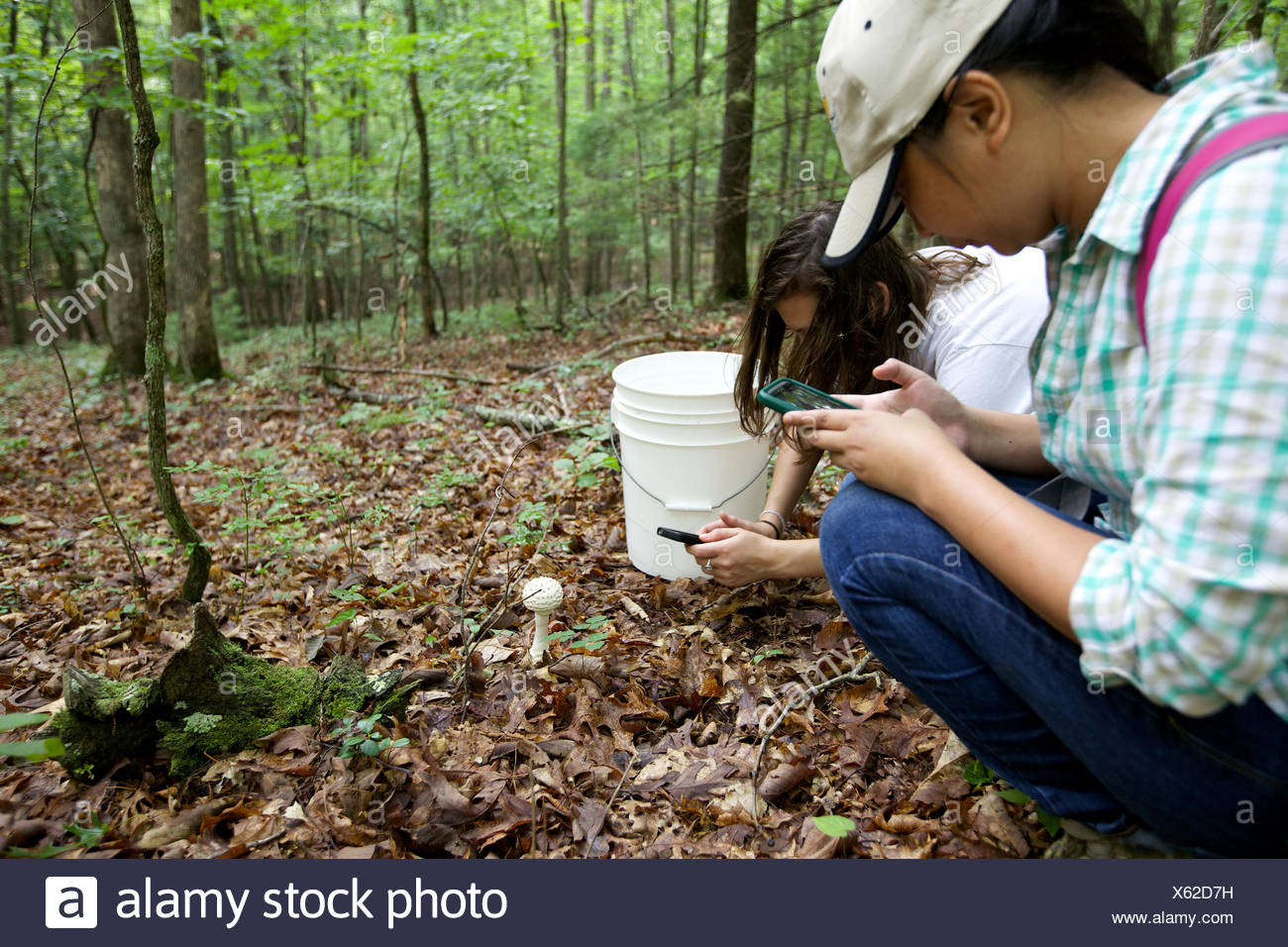 Two mycology students photograph a mushroom before collecting it. - Stock Image