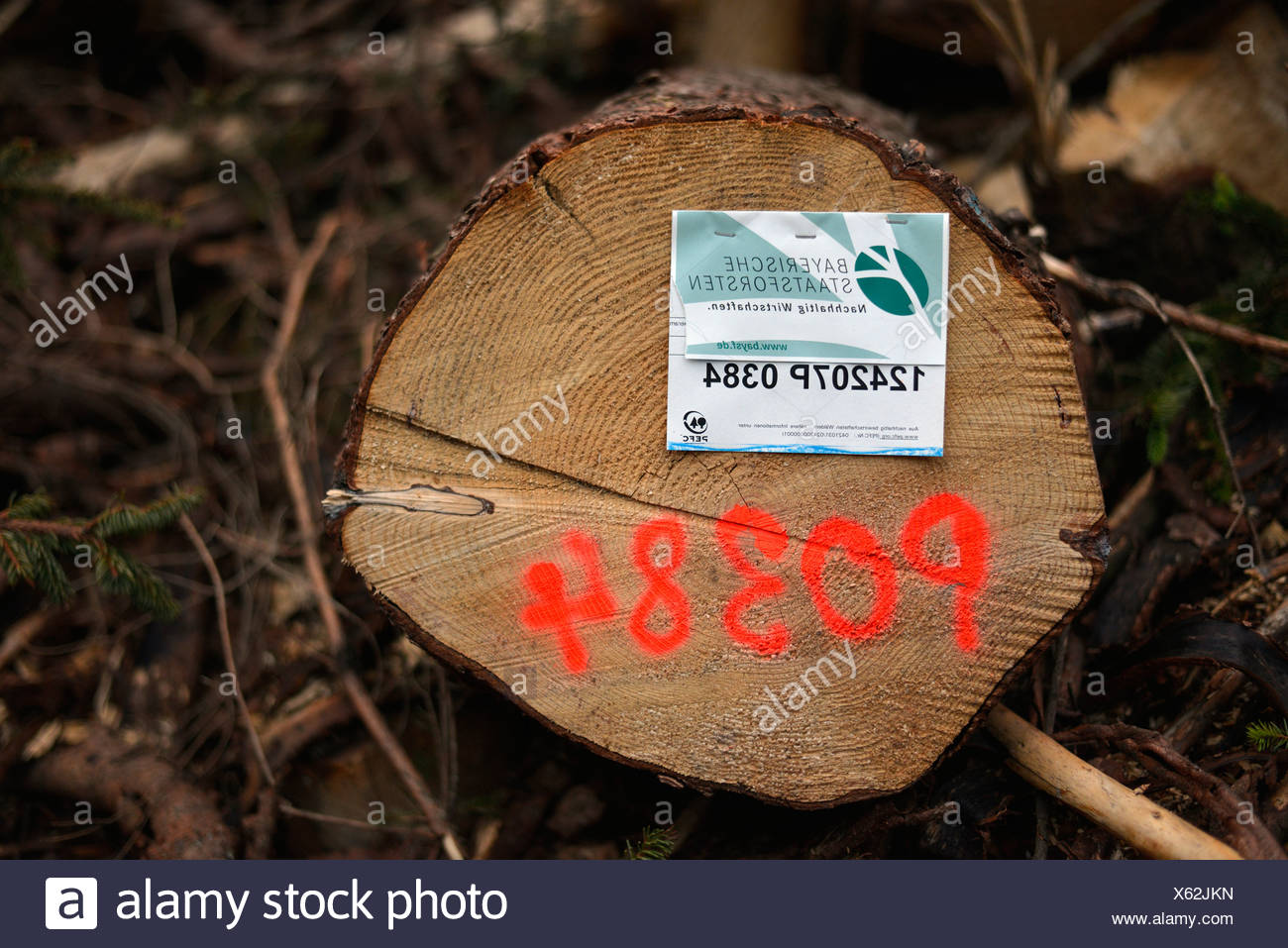 Concept of sustainability, labelling, freshly felled spruce tree from the Bavarian State Forestry, Schliersee, Bavaria - Stock Image