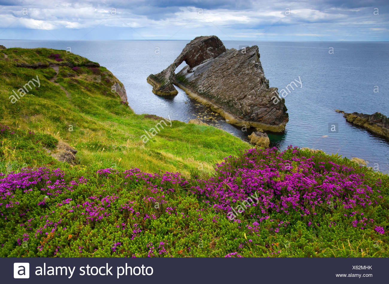 Bow Fiddle rock, skirt, Great Britain, Scotland, Europe, sea, coast, cliff coast, cliff forms, cliff curves, meadow, moor plants - Stock Image