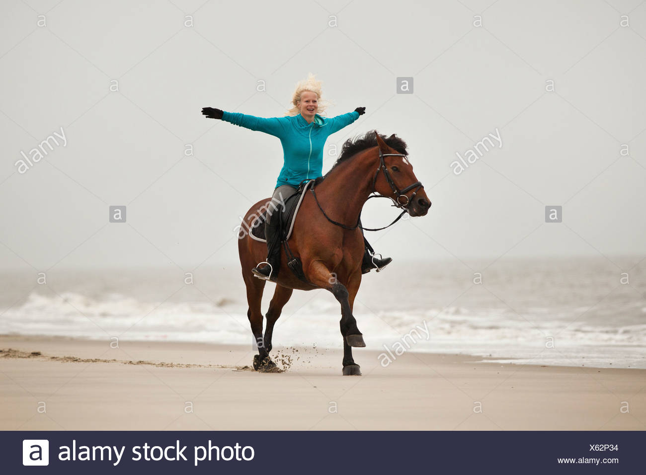 Woman riding freehand on an Andalusian half-breed gelding, wearing an English bridle, on the beach of Borkum, Lower Saxony - Stock Image