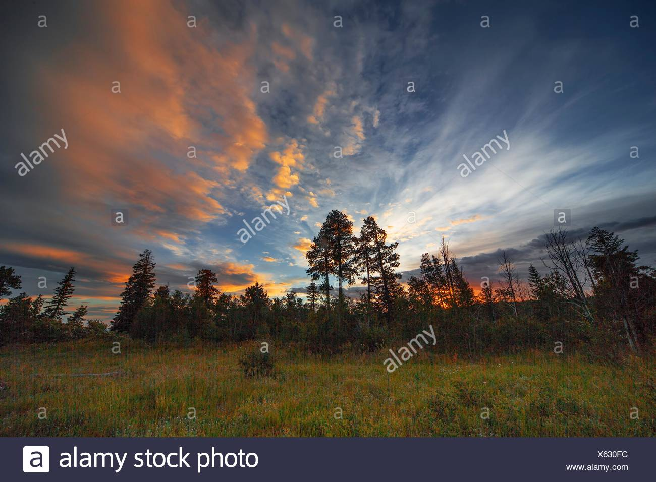 The sun sets behind the pine tree forests of Kaibab National Forest, Arizona. - Stock Image