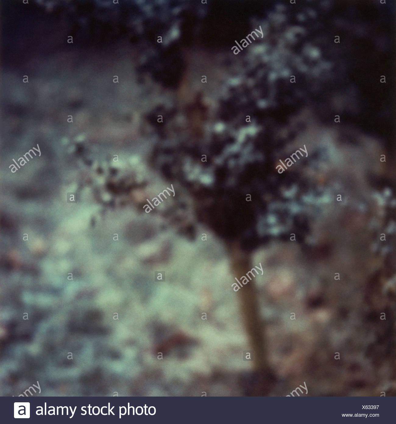 Tree, blurred Stock Photo