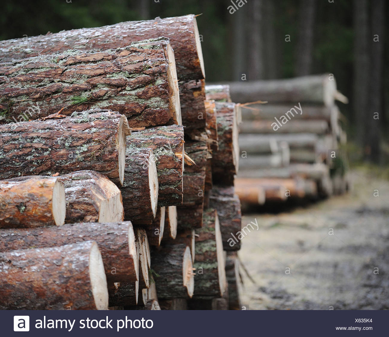Stapled tree trunks - Stock Image
