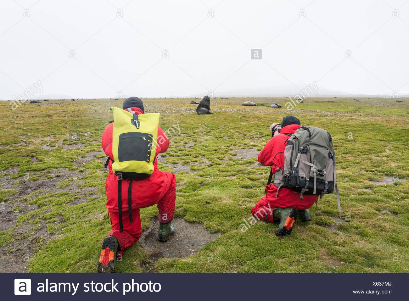 Two people taking pictures of seals and King Penguins on South Georgia. Stock Photo