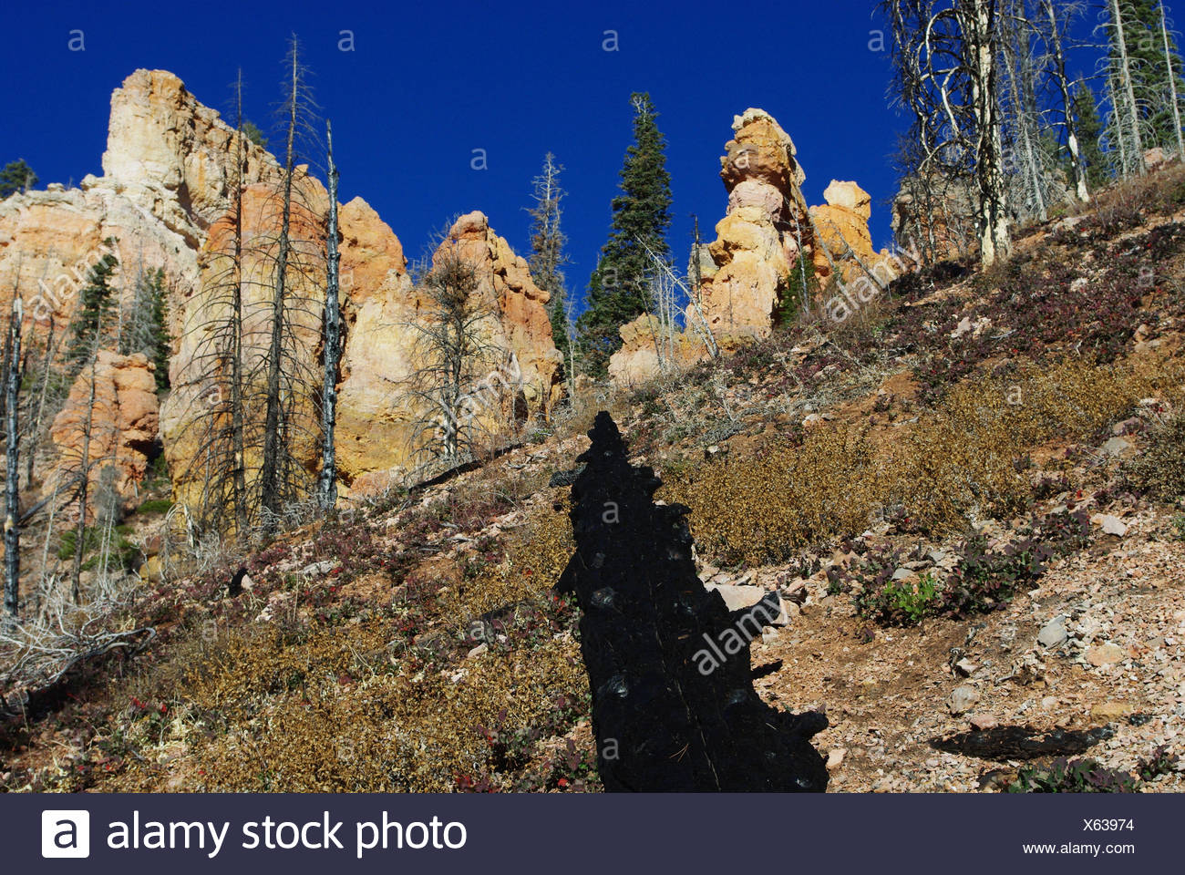 colours near grandview trail,dixie national forest,utah - Stock Image