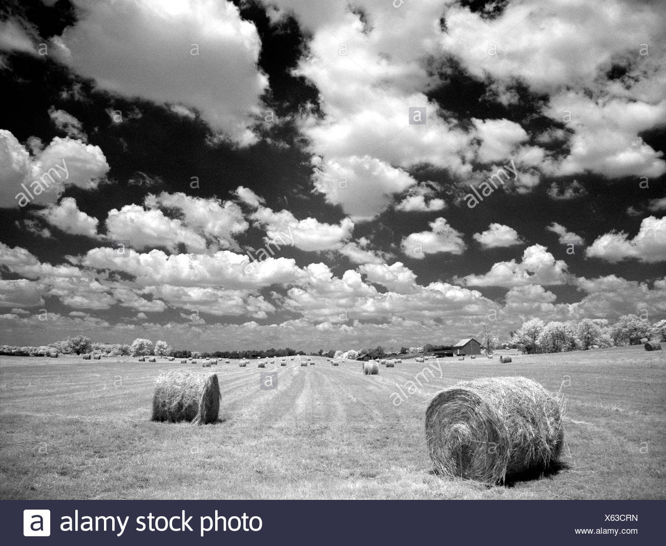 A hayfield with summer clouds - Stock Image