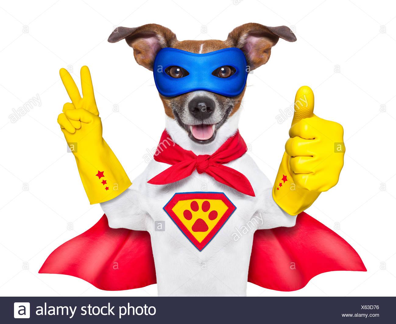 super hero dog - Stock Image