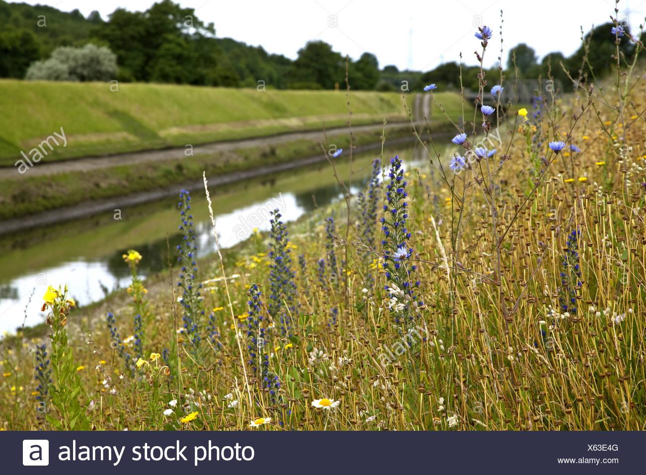 wild flower meadow at the Emscher, Germany, North Rhine-Westphalia, Ruhr Area, Essen Stock Photo
