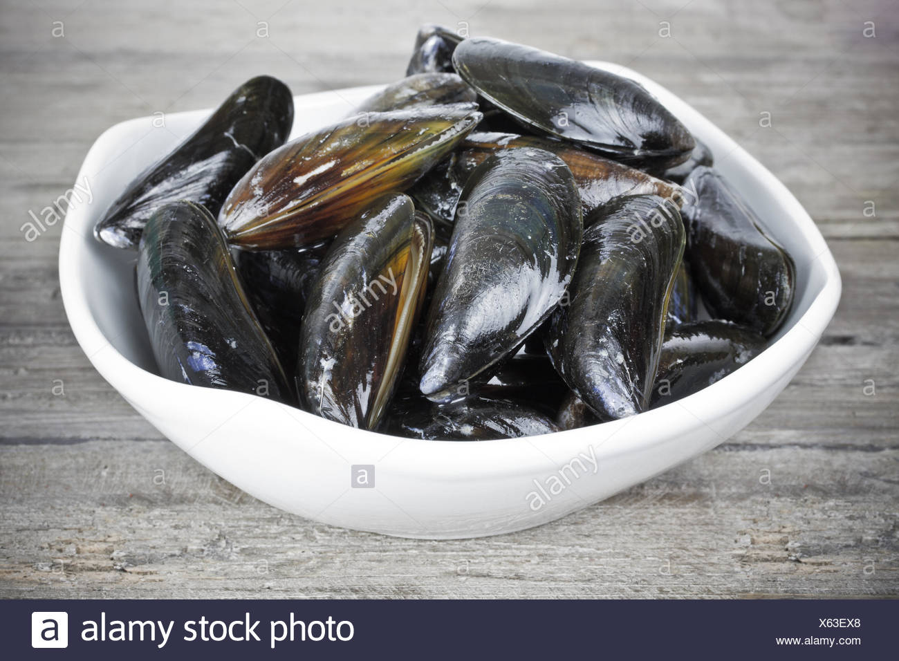 mussels - Stock Image