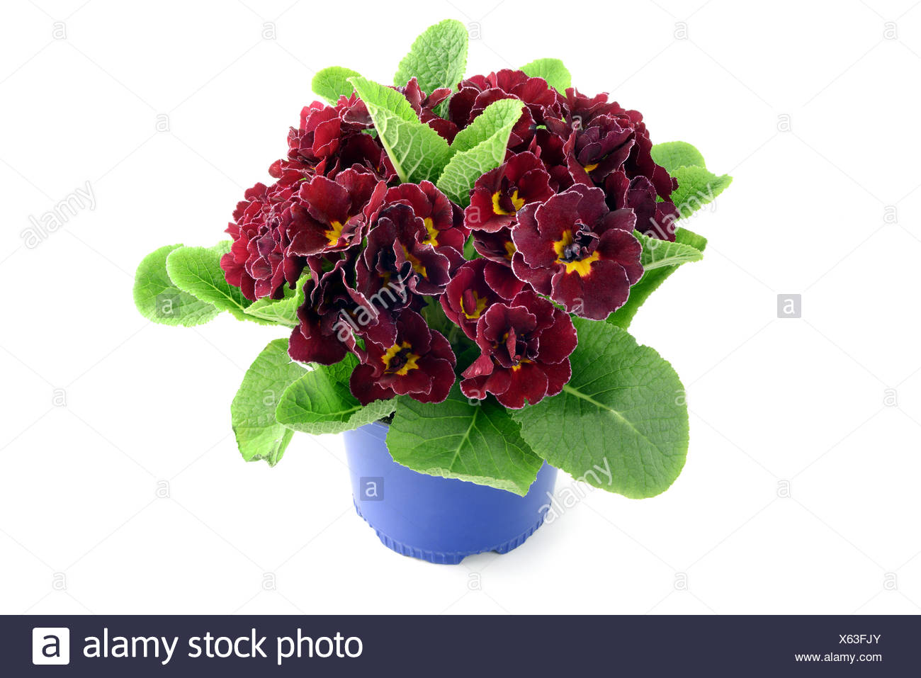 Potted Flowers White Background Stock Photos Potted Flowers White