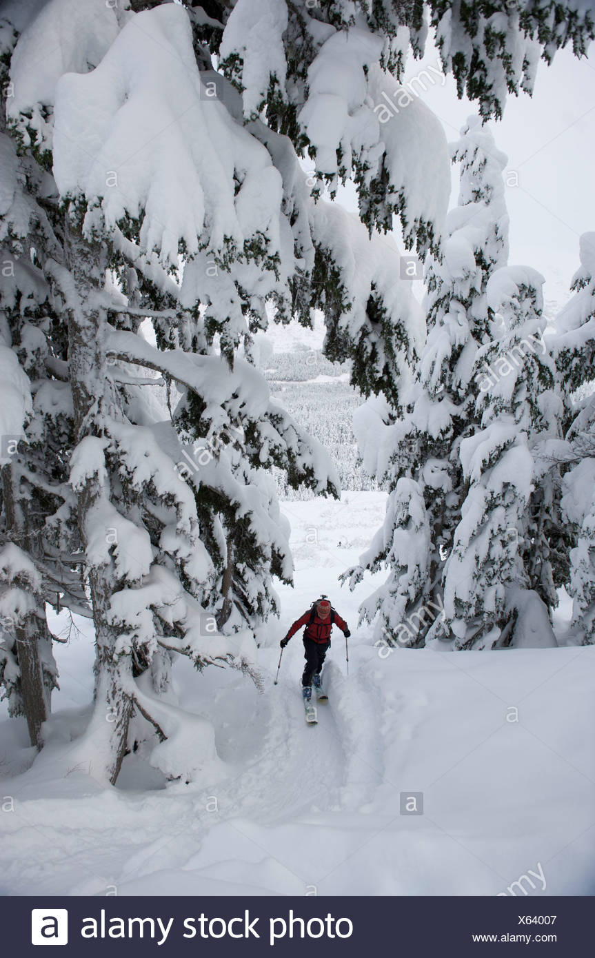 Woman skier skins up Tincan Ridge while backcountry skiing in Turnagain Pass, Southcentral Alaska, Winter - Stock Image