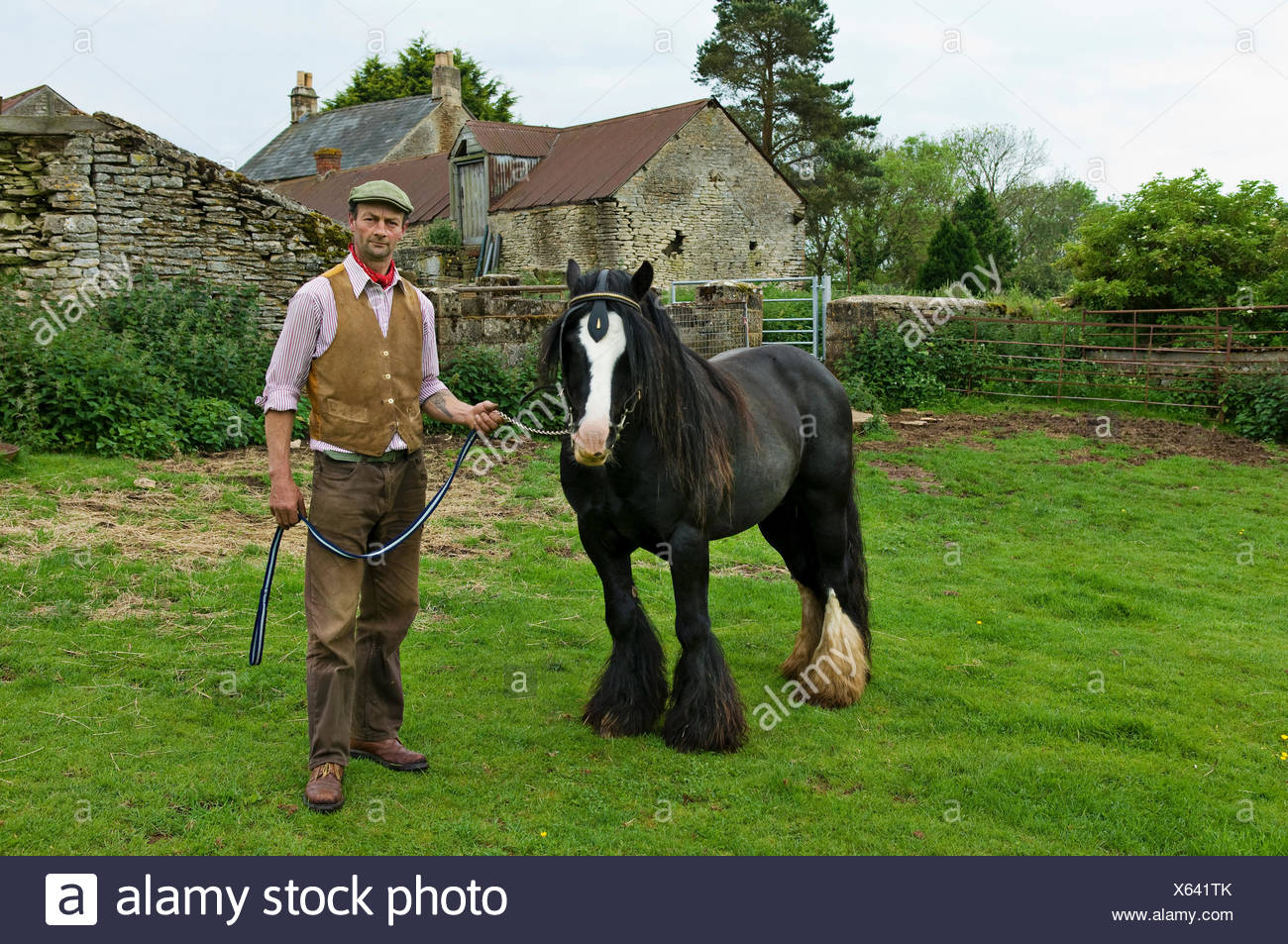 A farm worker holding a horse on a leading rein. - Stock Image